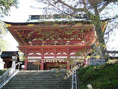 天然記念物・塩釜神社の塩釜桜